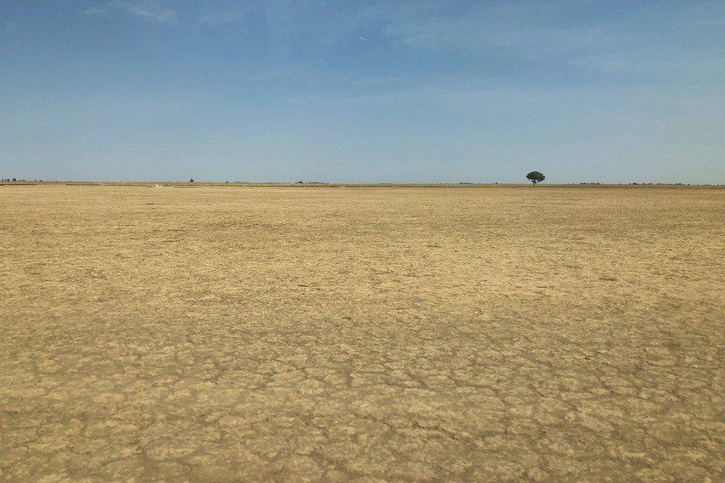 Le changement climatique et la dégradation des sols a contributé à la désertification dans le nord-est du Cameroun.