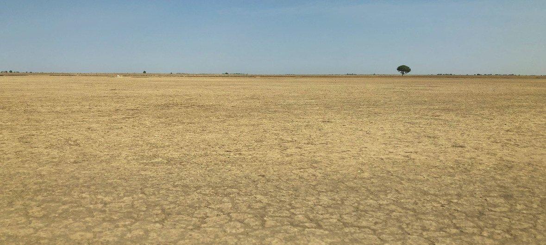 जलवायु परिवर्तन और भूमि के ग़ैर-ज़िम्मेदार तरीक़े से इस्तेमाल के कारण मरुस्थलीकरण का दायरा बढ़ा है. ये कैमरून के पूर्वोत्तर इलाक़े का एक दृश्य है. (जनवरी 2019)