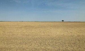 Climate change and the unsustainable use of land has contributed to desertification in the north-east of Cameroon. (January 2019)