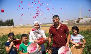 سالم الأزوق وعائلته خلال قطف الورود من مزرعتهم في سوريا.
