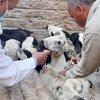 الصندوق الدولي للتنمية الزراعية يشارك بتنفيذ مشروع تعزيز القدرات التسويقية لصغار المزارعين بالريف المصري