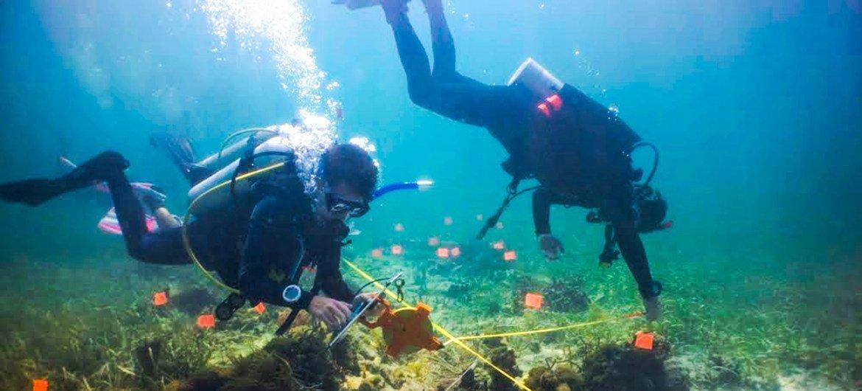Эти молодые люди пытаются сохранить коралловые рифы в Карибском море у побережья Коста-Рики.