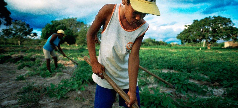 联合国人权专家今天对巴西发生非法采矿者袭击土著人事件表示谴责。