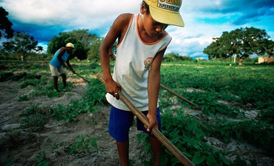 Menino ajuda família a trabalhar a terra no nordeste do Brasil