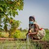Improving irrigation systems in developing countries supports livelihoods and helps attain the UN's sustainable development goals.