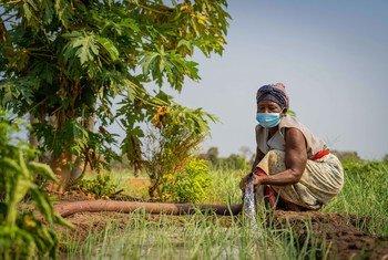 Mejorar los sistemas de riego en los países en desarrollo favorece la mejora de los medios de subsistencia y ayuda a alcanzar los objetivos de desarrollo sostenible. de la ONU.