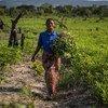 Una agricultora de la República Democrática del Congo beneficiada con los programas de capacitación y distribución de herramientas y semillas de la FAO.
