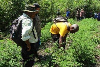 Ujuzi wa watu asilia huko Belize umechangia afya ya bayoanuai  Amerika ya Kati