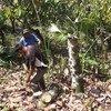 Huko Belize, jamii ya watu wa asilia huchukuliwa kuwa washirika muhimu kwa utunzaji na juhudi za maendeleo endelevu