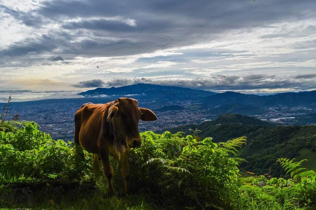 Por décadas, el desarrollo productivo y el crecimiento urbano descontrolado redujeron considerablemente sus bosques y destruyeron sus ecosistemas.
