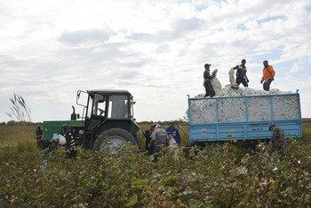 Жизнь более ста миллионов семей по всему миру связана с выращиванием и переработкой хлопка, а также с производством одежды и других товаров из него.