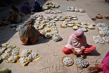 पाकिस्तान के मुल्तान शहर में, महिलाकर्मी कपास की सफ़ाई करते हुए.