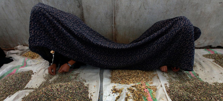 Sistema de justiça afegão continua falhando vítimas de violência de gênero