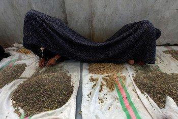 لا يزال نظام العدالة في أفغانستان يخذل النساء ضحايا العنف والجرائم الجنسية.