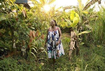 Mereng Alima Bessela, mwenye umri wa miaka 50, ni mjasiriamali mwenye mafanikio makubwa na anatoka eneo la Ntui, kwenye mkoa wa Kati wa Cameroon. Yeye ni mkulima wa kakao, zao ambalo kwa kawaida huwa ni kilimo cha wanaume pekee. Pia anamiliki mgahawa na anafuga samaki.