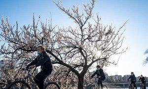 在2019冠状病毒大流行期间,自行车已成为乌克兰基辅人们在通勤和休闲的选择。