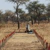 南苏丹冲突后,联合国地雷行动处一直在那里清除地雷。