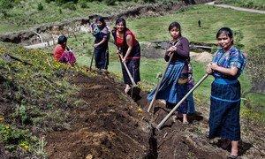 Women farmers in Guatemala.