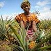 Une femme cultivatrice d'ananas en Zambie, un pays d'Afrique centrale