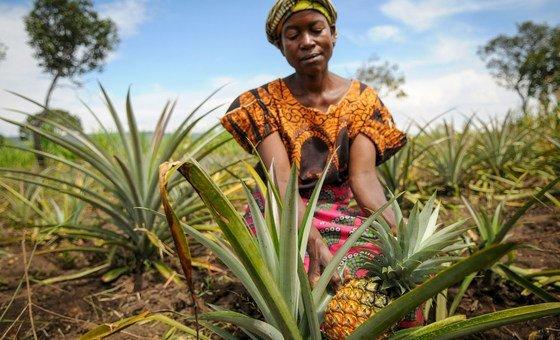 A woman pineapple farmer in Zambia.