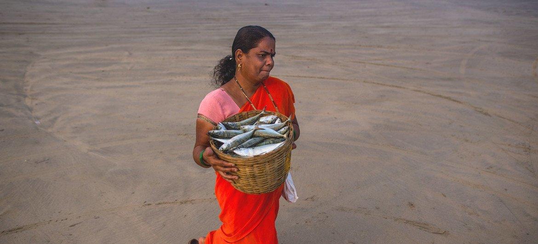 Una mujer carga pescado desde la orilla de una playa en Maharashtra, India.