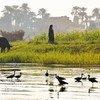 قدّم نهر النيل مياها عذبة، وغذى الزراعة ودعم سبل العيش في مصر والسودان وإثيوبيا لآلاف السنين