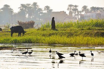 The Nile has delivered  freshwater, fed agriculture, and supported livelihoods in Egypt, Ethiopia and Sudan for  thousands of years.