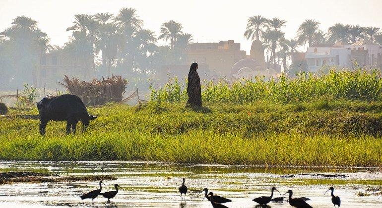 几千年来,尼罗河为埃及、埃塞俄比亚和苏丹输送了淡水,滋养了农业,并支持了人们的生计。
