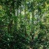 Mbandza Forest, Congo