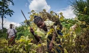 联合国难民高专格兰迪在访问刚果民主共和国期间呼吁为该国应对流离失所危机提供更多支持。