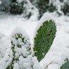 美国德克萨斯州在2021年2月经历了异常的低温。