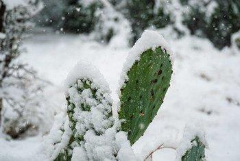 El estado estadounidense de Texas registró temperaturas inusualmente bajas en febrero de 2021.