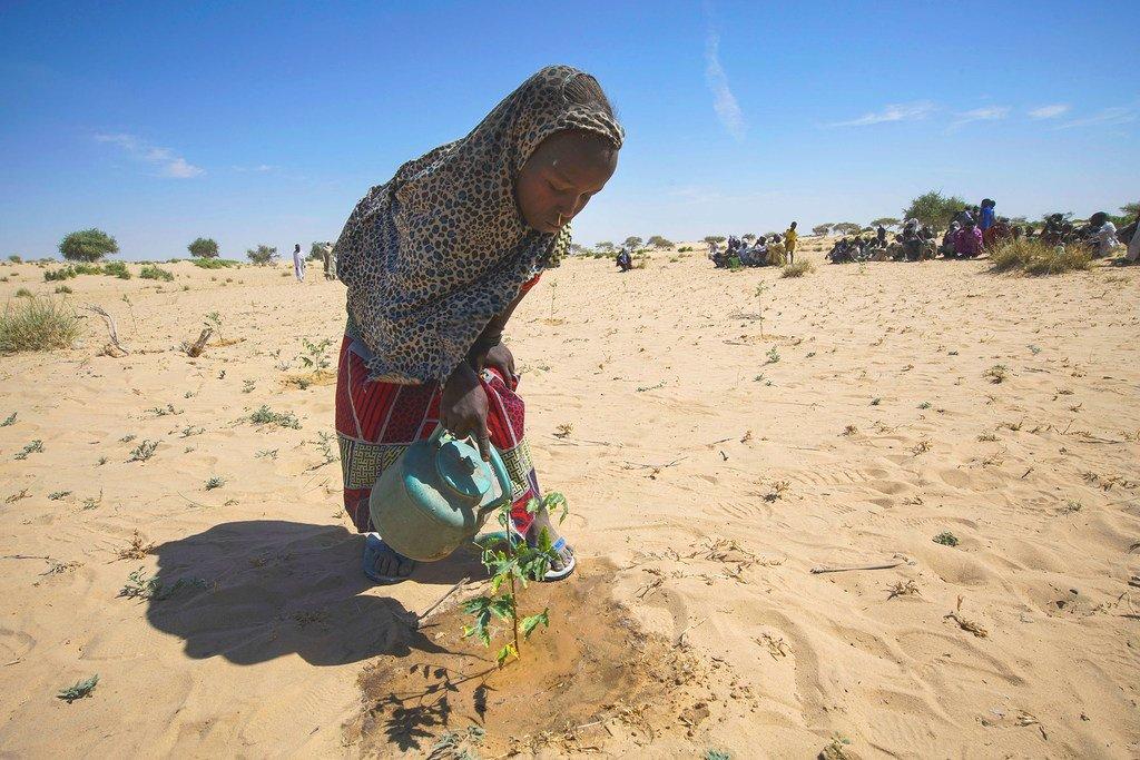 一个小女孩在乍得湖的梅里亚地区给幼苗浇水,这种工作已经成为日常惯例。