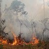 Incêndio na floresta Amazônia no Brasil.