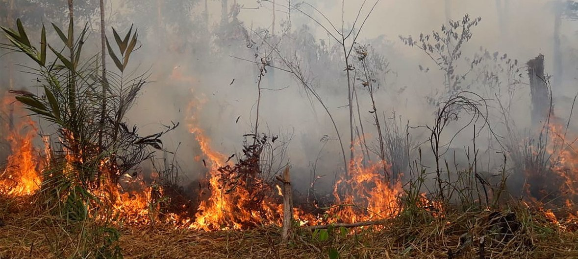 A fire burns in the Amazon rainforest in Brazil.