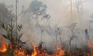 Incêncio na floresta Amazônia no Brasil (2019)