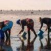 La FAO aide à créer des moyens de subsistance durables pour les femmes récolteuses de palourdes en Tunisie.