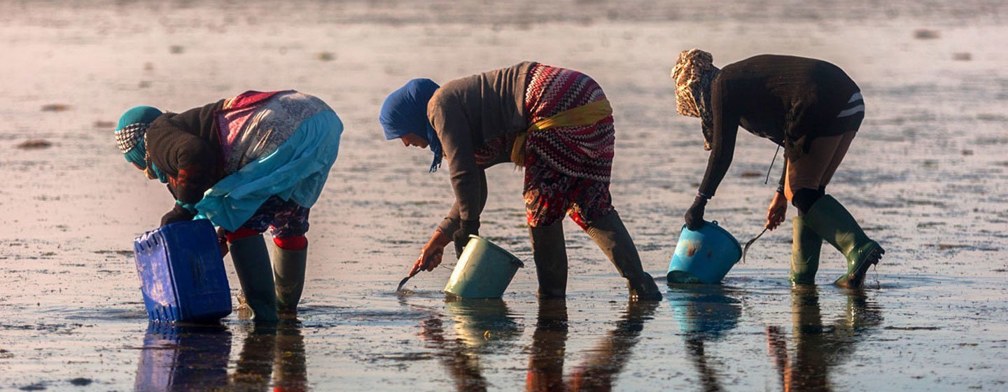 FAO is helping to create sustainable livelihoods for female clam collectors in Tunisia.