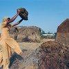 भारत में एक युवती गोबर का इस्तेमाल उपले बनाने में कर रही है, जिसे ईंधन के रूप में इस्तेमाल में लाया जाता है.