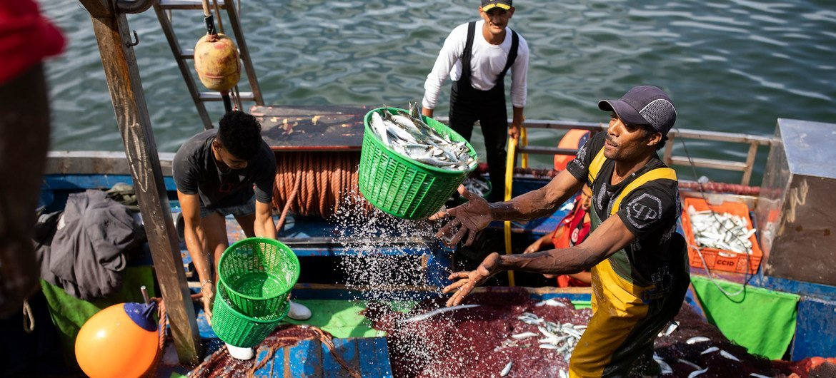 Dock workers unload fresh fish from a boat in Casablanca, Morocco.