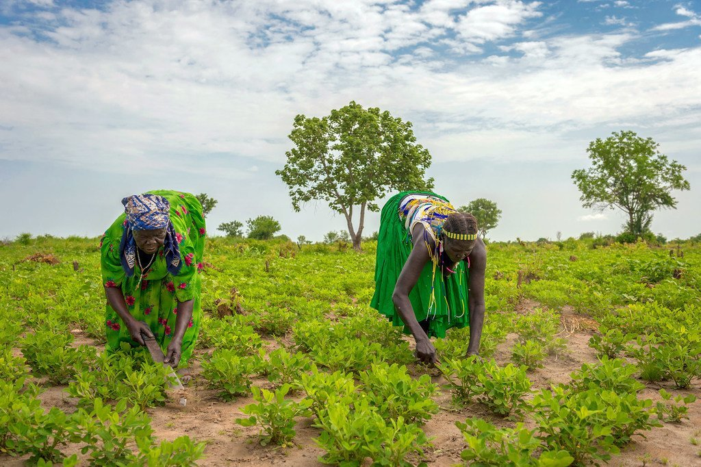 Women work in a field in Jubek State, South Sudan, where the World Food Programme is promoting sustainable agriculture to strengthen incomes and livelihoods.