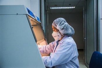 Un technicien de laboratoire travaille dans un centre de recherche à Bangkok, en Thaïlande. Ce centre collabore avec l'OMS sur les zoonoses virales.