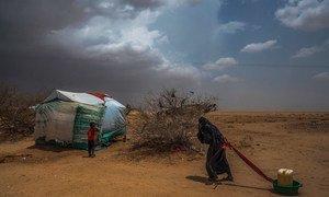 Une femme âgée traîne de l'eau jusqu'à sa tente dans un camp de déplacés à Abs, près de la frontière saoudienne dans le nord du Yémen.