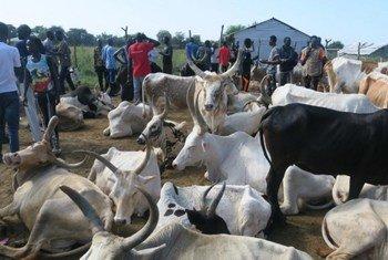 पशु चिकित्सा सेवाओं की उपलब्धता से स्थानीय लोगों को राहत मिली है.