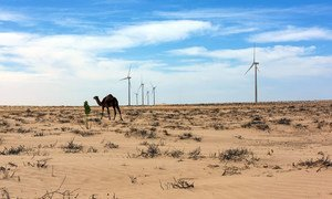 Throughout COVID-19 recovery, 'plummeting' clean energy costs can help climate action