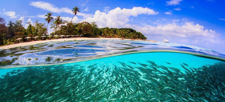 Ondas de calor nos mares será acompanhada por acidificação e baixos níveis de O2