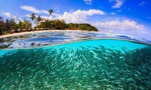 Des poissons au large de l'île de Lang Tengah, en Malaisie.