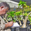 Mike Demotta is the curator for living collections at Hawaii's National Tropical Botanical Garden.