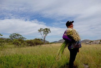 Farmers who gatherer flowers in the Southern Espinhaço Mountain Range in Brazil enhance biodiversity and preserve traditional knowledge.