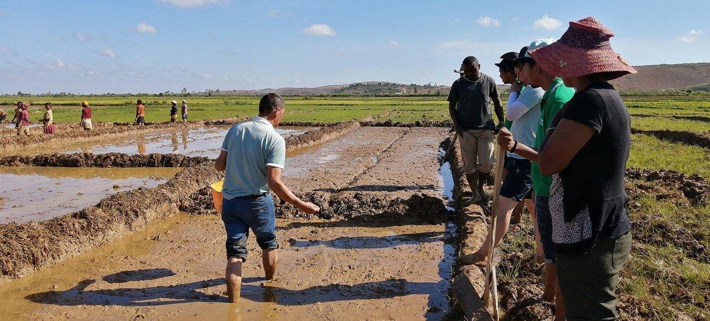2019年,粮农组织-中国南南合作计划派遣的中国专家在马达加斯加指导培训杂交水稻播种。